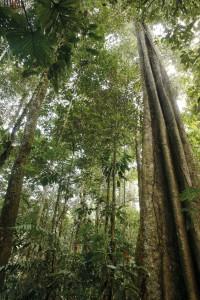 Woudreuzen in de jungle van Peru